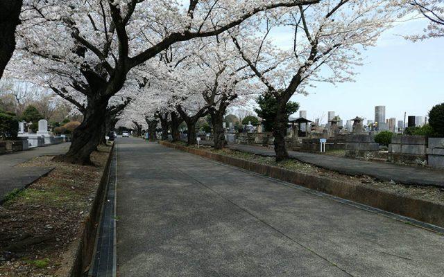 緑ヶ丘霊園